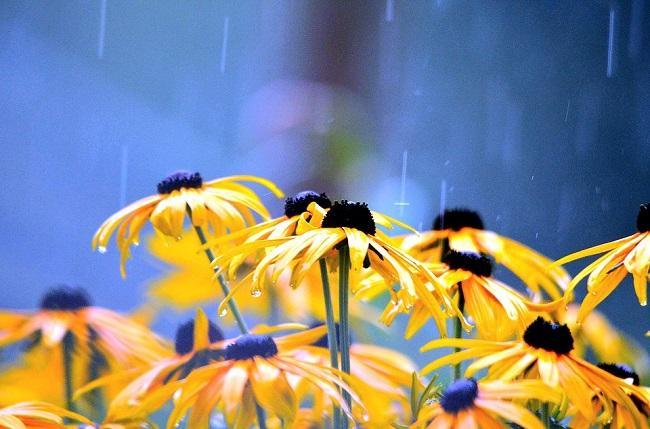 Дождь на Елисея - к непогоде в течение 7 недель