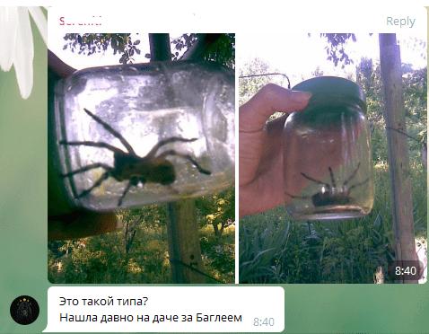 Под Днепром активизировались ядовитые пауки: вся земля в норах