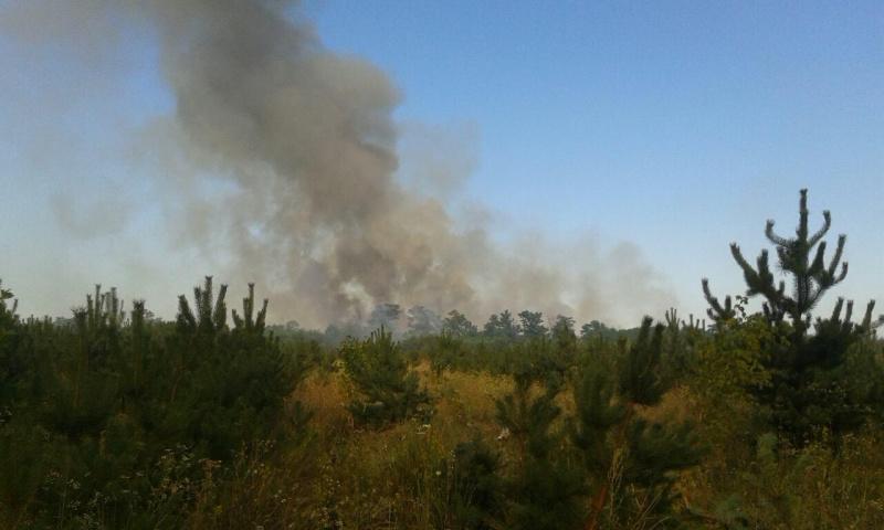 УПолтавській області увеликій пожежі згоріли 22 гектари лісу