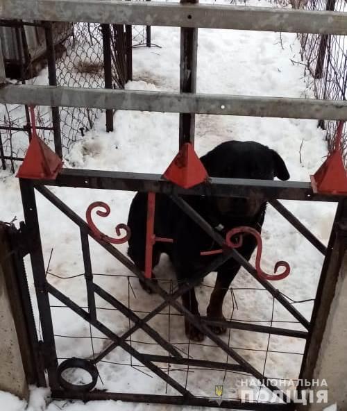 ЧП под Харьковом: ротвейлер во дворе дома загрыз насмерть ребенка