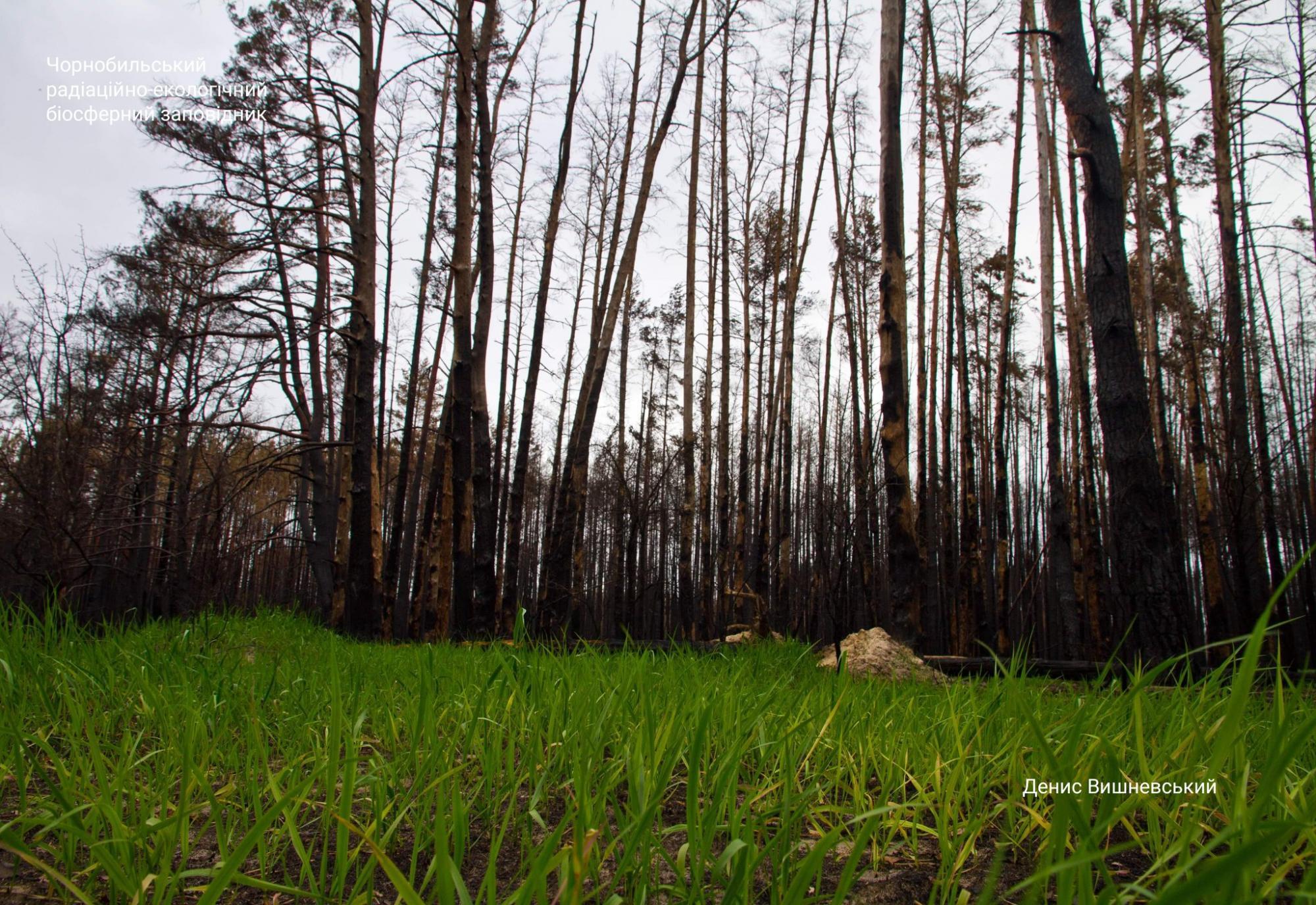 Чернобыль оживает после пожаров: новые фантастические снимки