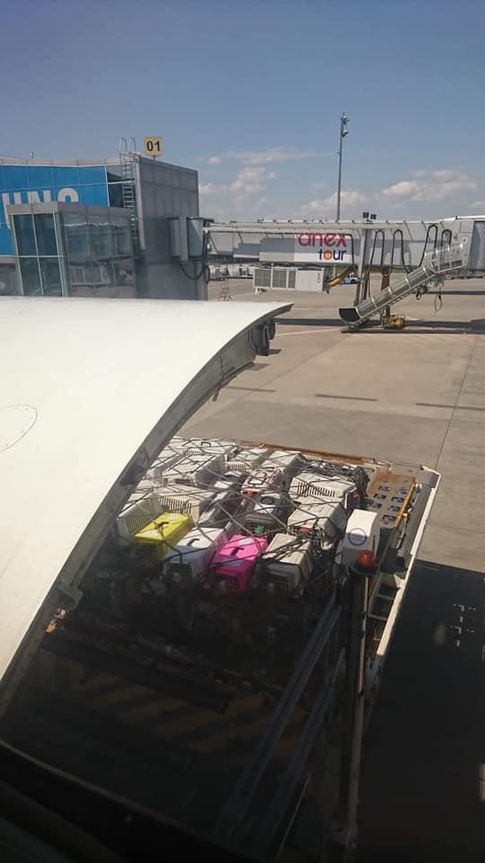В самолете МАУ погибли 38 щенков в грузовом отсеке: вспыхнул громкий скандал