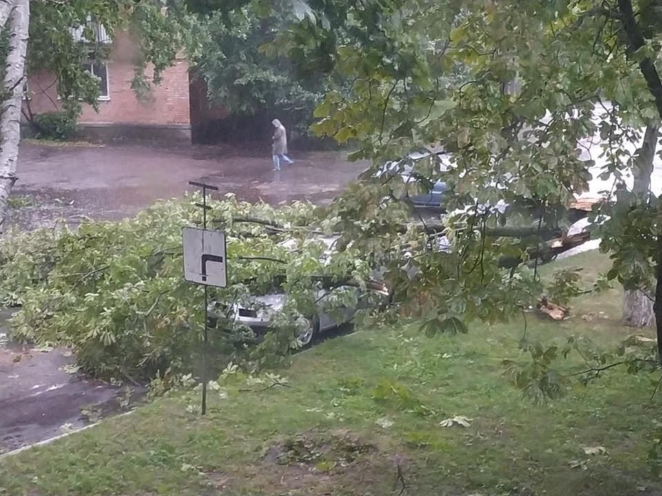 Ураган под Полтавой срывал крыши и деревья, пробивал ветвями авто и погрузил область во тьму