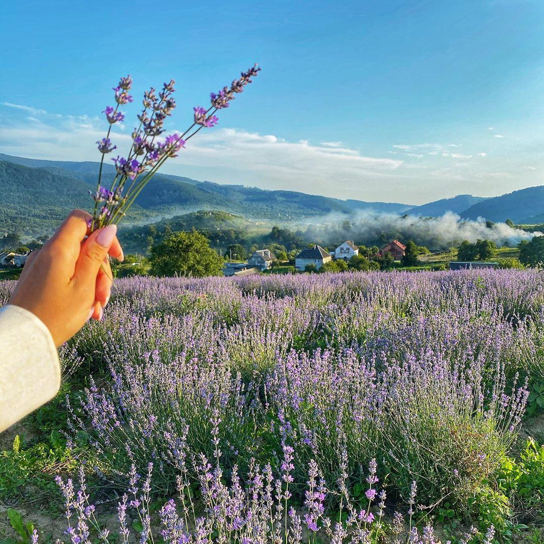 Це просто неймовірно: стильна Леся Нікітюк показала найкрасивіше поле в Карпатах (фото)