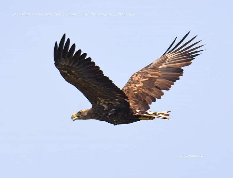 У Чорнобилі з'явилися рідкісні птахи: занесені в Червону книгу