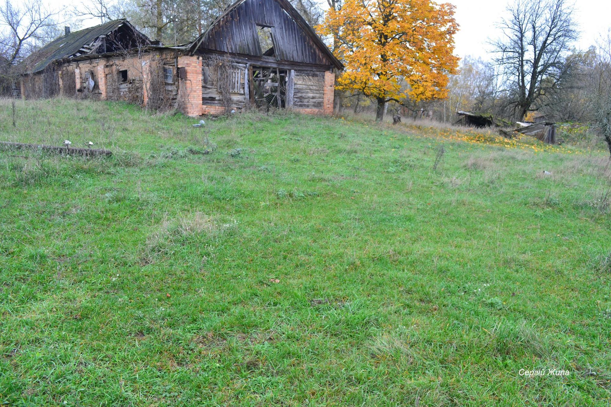 У Чорнобилі показали стадо здичавілих тварин висотою майже в людський зріст