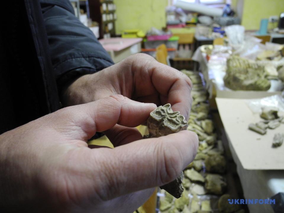 В Украине раскопали 300-тысячелетний зуб мамонта: фото сенсационной находки