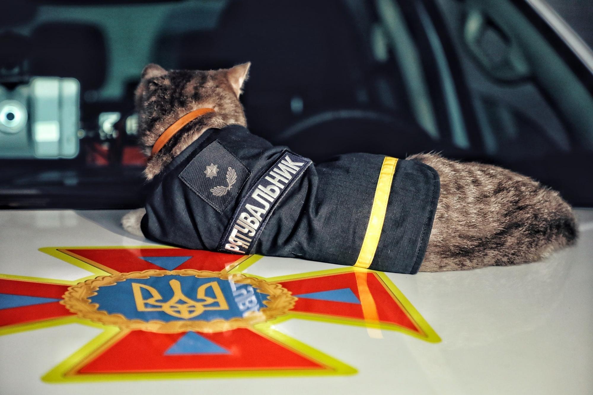 """У Києві кіт став рятувальником і """"дослужився"""" до майора: історія хвостатого надзвичайника"""