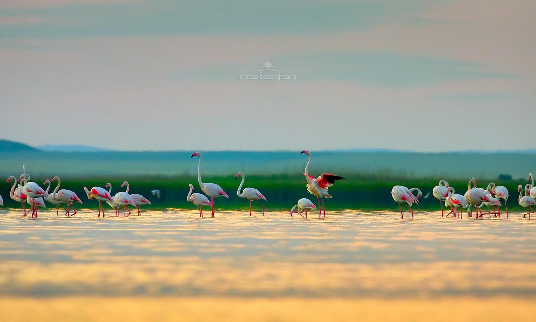 Розовые фламинго пролетели над Дунайским заповедником: невероятной красоты фото