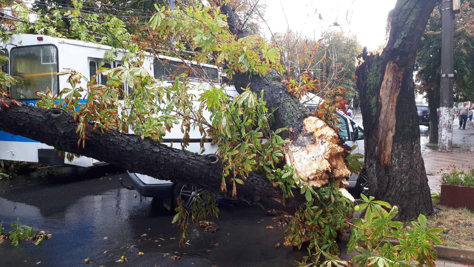 В Виннице дерево упало и накрыло троллейбус с людьми: фото и видео последствий стихии
