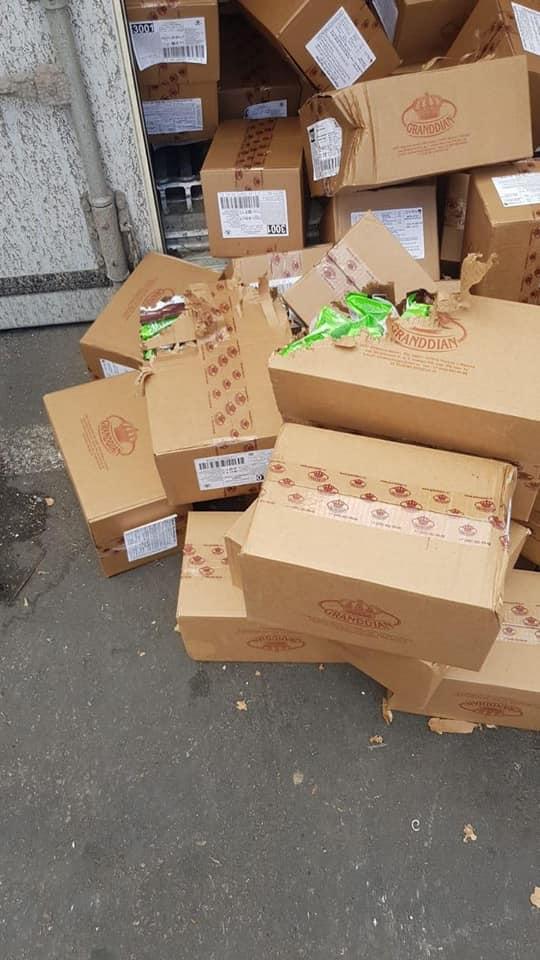 Украинский кот добрался до Израиля в контейнере с конфетамии стал звездой: как это получилось