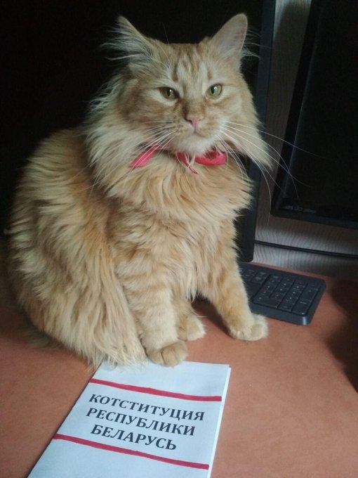 Если диктатор, то только такой:белорусы массовоинаугурируют котов, собак и мышей (фото)