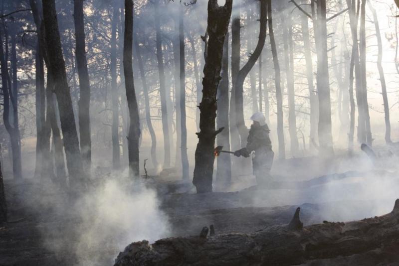 В Запорожской области произошел лесной пожар на острове Хортица ...