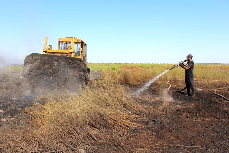 В Полтавской области ликвидировали торфяной пожар, длившейся трое суток