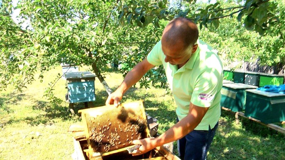 В Украине разводят уникальных пчел, которые не жалят людей: как они выглядят