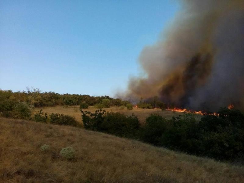 УМиколаївській області виникла лісова пожежа
