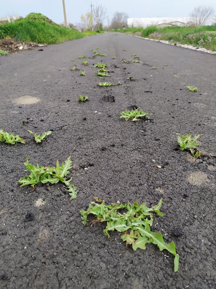 Під Нікополем на новій дорозі з-під асфальту почала рости трава: фото шокувало мережу