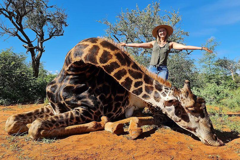 """У ПАР чоловік з дружиною на 14 лютого вбили жирафа і зробили з його серця """"валентинку"""""""