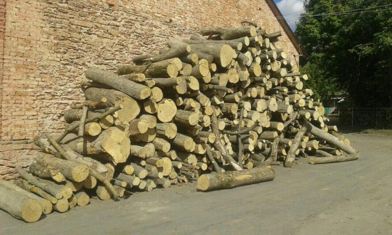 СБУ пресекла схему хищения ценных пород древесины наРовенщине