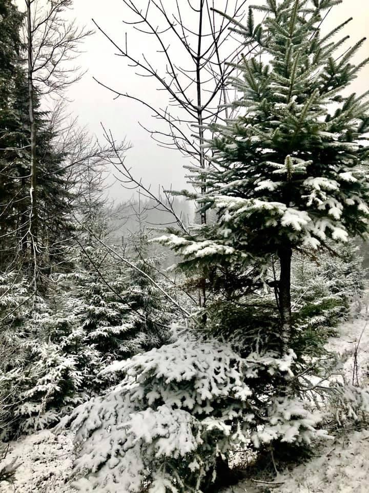 Україну засипає снігом: мальовничі зимові фото