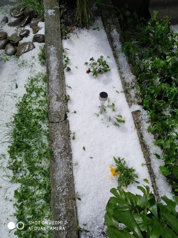 Град на Закарпатті повністю знищив майбутній урожай (фото)