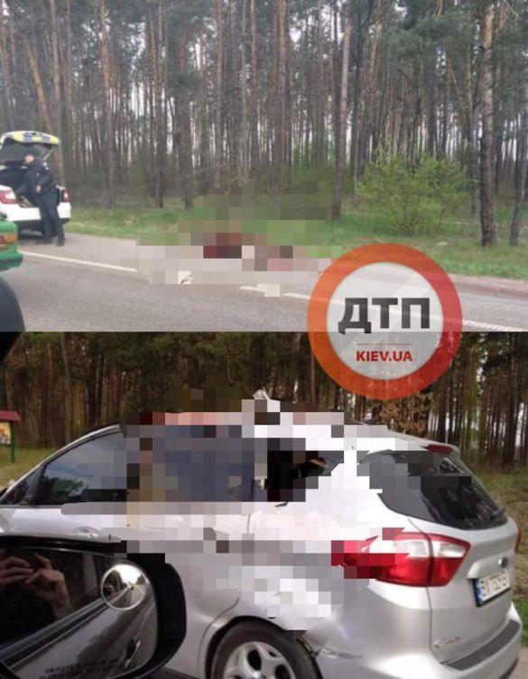 Під Києвом авто на шаленій швидкості збило лося: підсумок ДТП - на фото