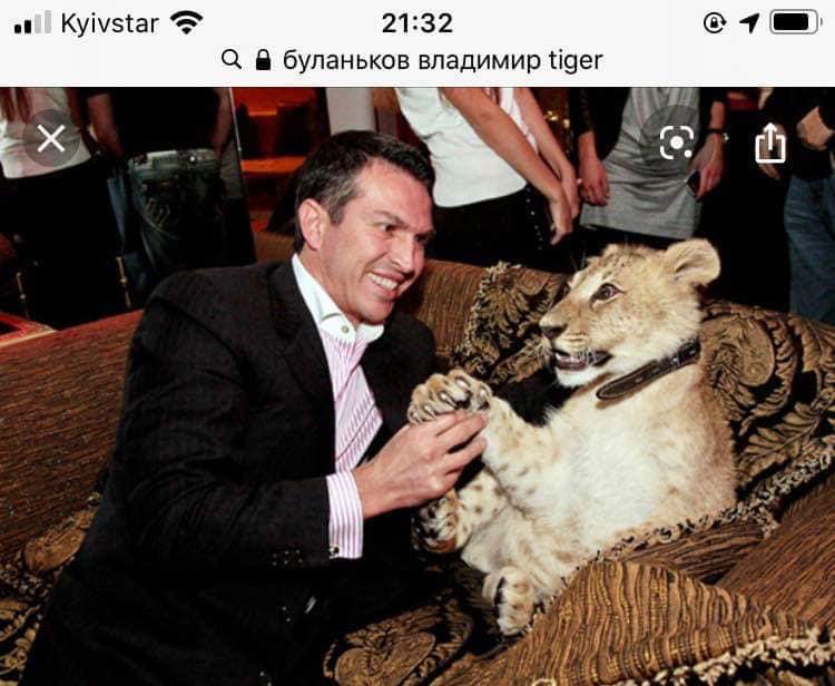 В Киеве бросили шесть тигров: хищников использовали для чудовищной цели