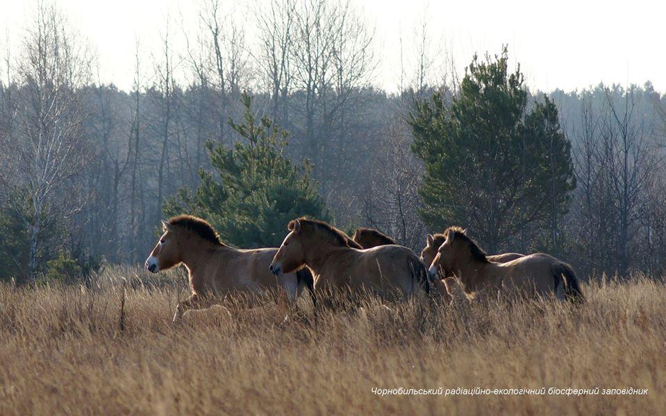 Зима отменяется: в сети появились впечатляющие фото животных из Чернобыля