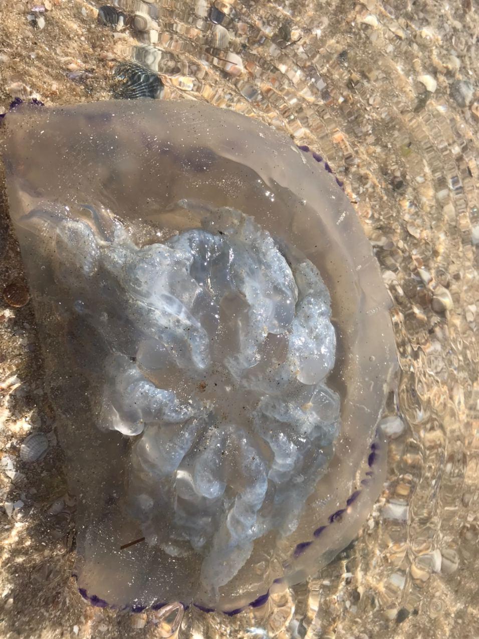 Азовське море в розпал оксамитового сезону атакують небезпечні тварини (відео)