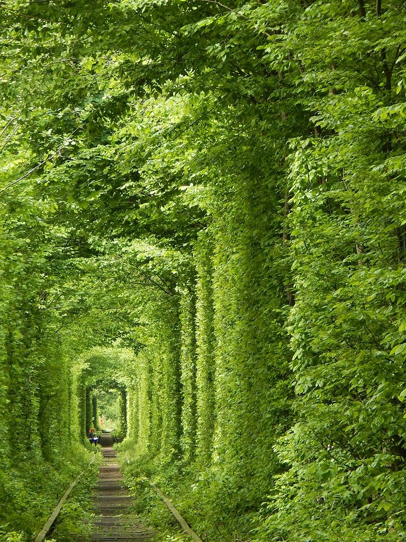 У Черкасах познущалися над пам'яткою тунель кохання: як він тепер виглядає