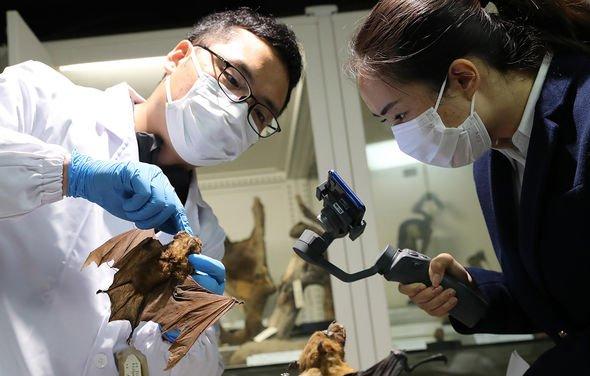 Вчені знайшли в Китаї у кажанів новий коронавірус, майже ідентичний COVID-19