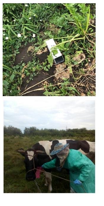 На Волыни после укуса овода женщина заболела опасной болезнью: медики сначала лечили коронавирус (фото)