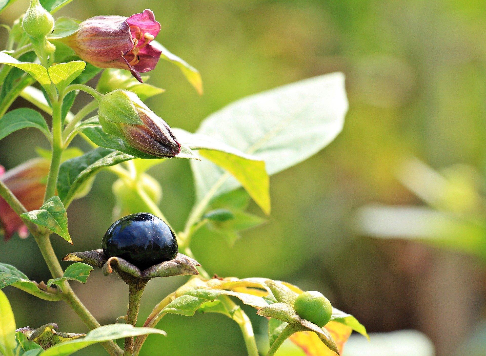 Можуть отруїти і паралізувати: назвали небезпечні для здоров'я рослини