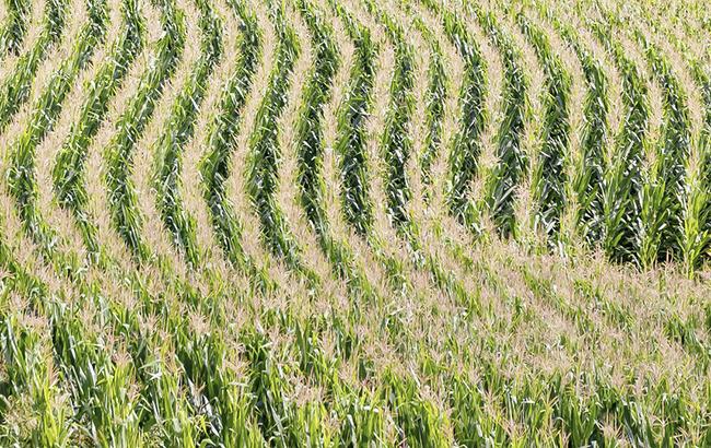 Продажа земли в Украине: названа стоимость гектара