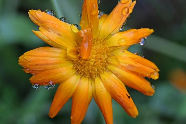 Дощ на свято Самсона 10 липня до опадів 7 тижнів