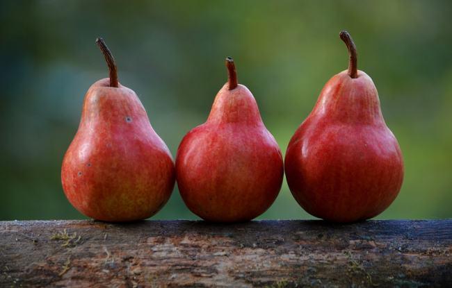 10 серпня збирають урожай груш