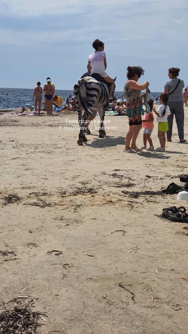 На популярному українському курорті коня перефарбували в зебру і змусили працювати в спеку