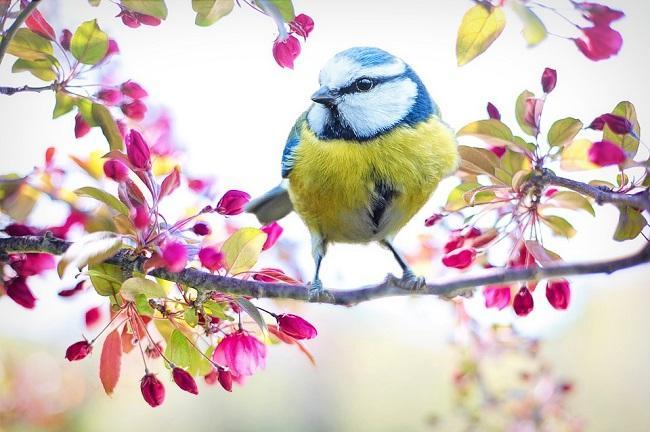 В праздник Тихона птицы затихают