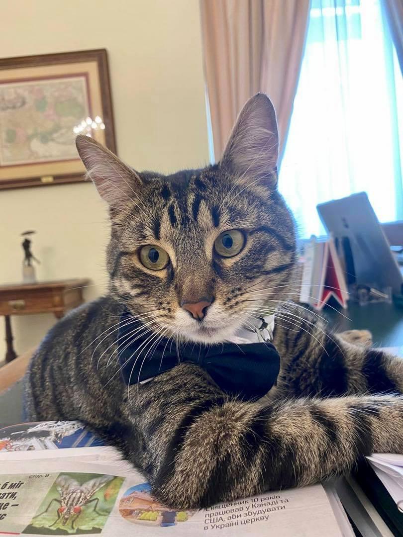 """Во Львове нашли сбежавшего из горсовета """"кошачьего мэра"""": воля аукнулась животному травмой"""