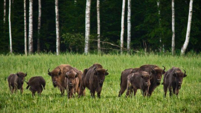 У Чорнобилі показали найбільшу наземну тварину Європи: габарити вражають (фото)