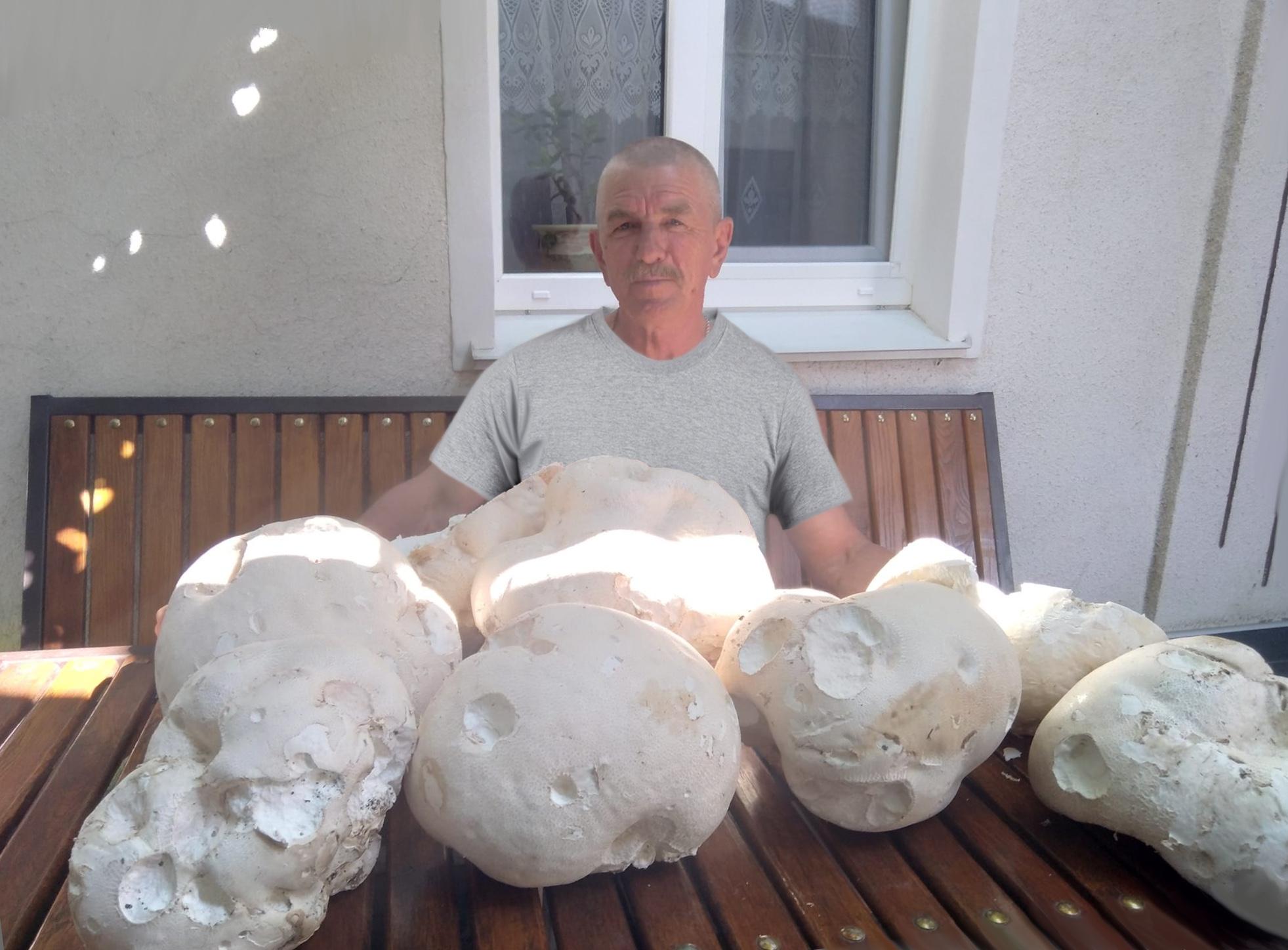 На Вінниччині чоловік знайшов гриби-гіганти: вага кожного - 3 кг