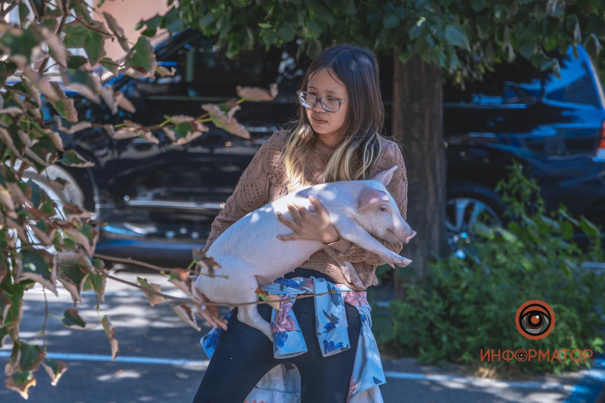 В центрі Дніпра американка вигулювала порося і теля, які живуть з нею на орендованій квартирі (фото)