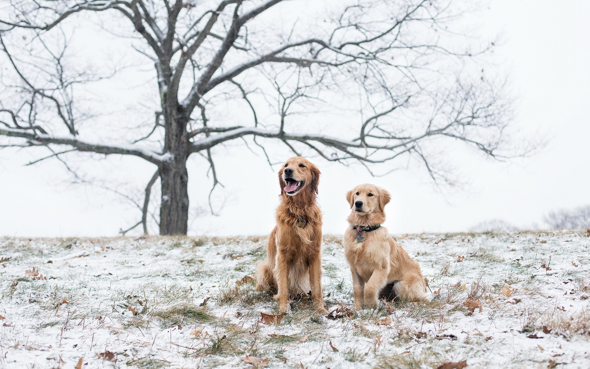 http://www.rbc.ua/static/files/gallery_uploads/images/Animals___Dogs_Two_dogs_in_the_snow_087948_.jpg