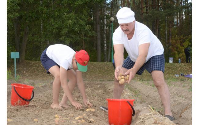 Фото: Лукашенко с сыном собирает урожай