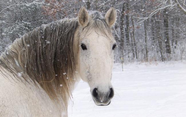 Фото: Біла кінь