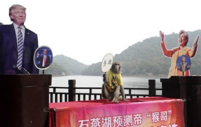 Фото: Мавпа-пророк (Samaa TV)