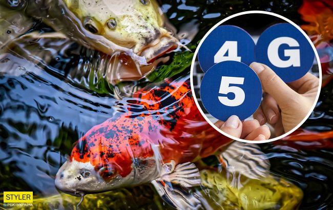 Волны 3G и 4G безвредны: ученые провели эксперимент на рыбах
