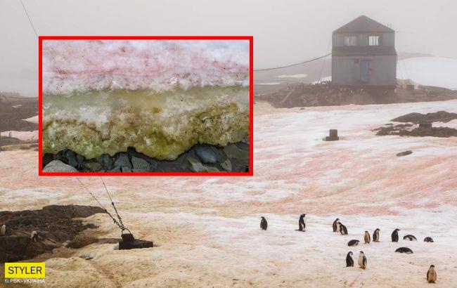 Украинские полярники показали аномалию в Антарктиде: невероятные фото