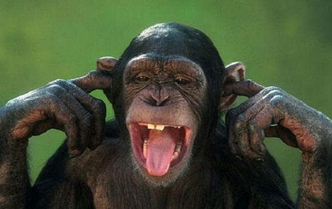 Фото: Мавпа (goodnewyear.ru)