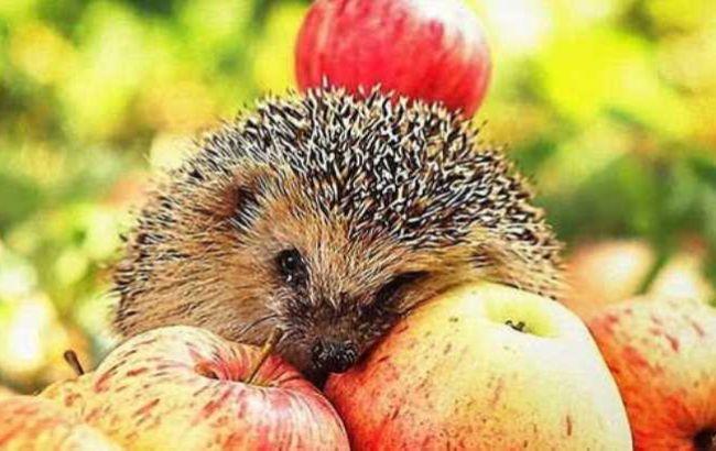 Спека почне розкручуватися: синоптик уточнила прогноз на яблучний Спас